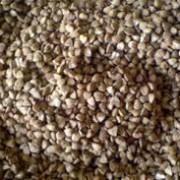 Buckwheat_kernels