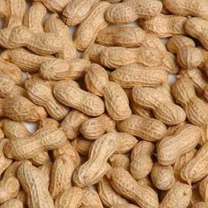 жареный арахис в скорлупе продам
